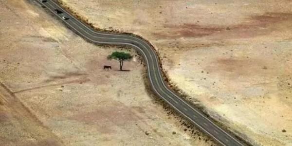 """建筑给""""树""""让路"""